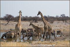Etosha National Park - am Wasserloch