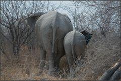 Etosha National Park - Elefantenmutter mit Kind