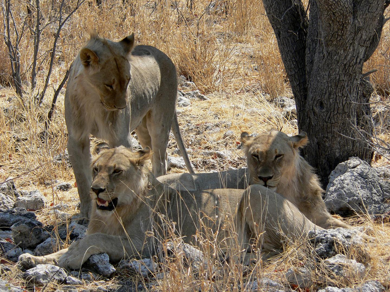 Etosha-Pfanne / Namibia