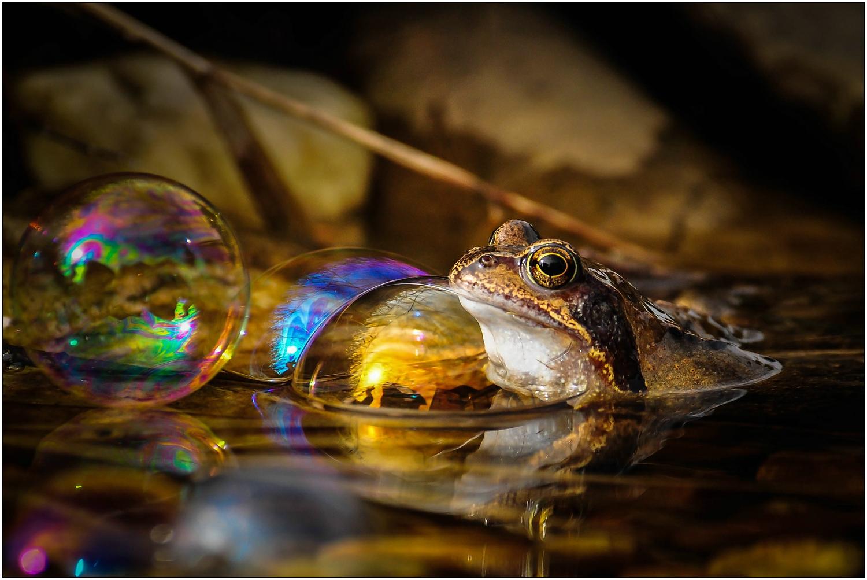 """Etwas Farbe braucht der """"Froggy"""""""