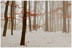 Etwas Farbe im Wald