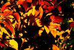 etwas Farbe und Licht aus dem Herbst zurück geholt...