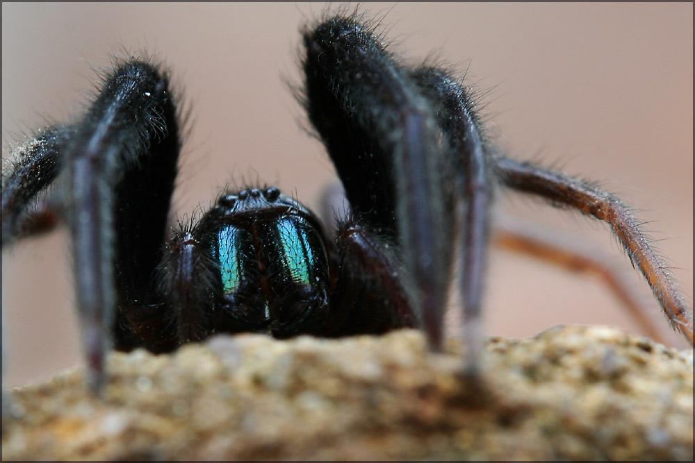 etwas für den Abend ....Spinnenaugen