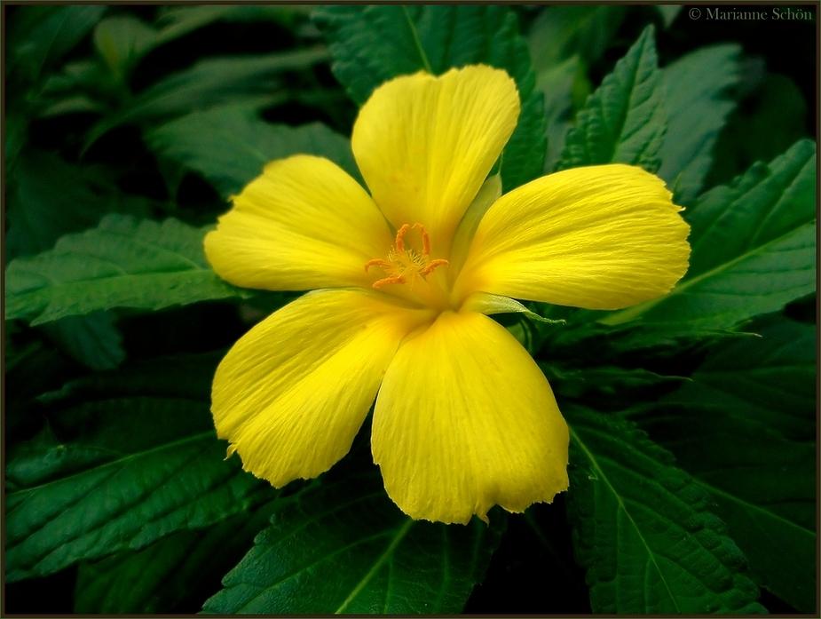 Etwas Gelb für den heutigen Mittwoch ...