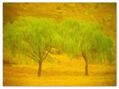 Etwas Grün in den Drakensberge