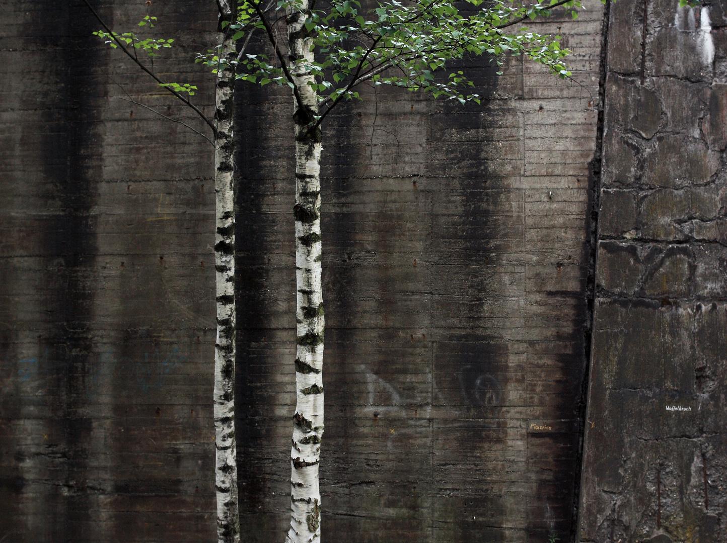 Etwas Grün vor altem Beton (1)
