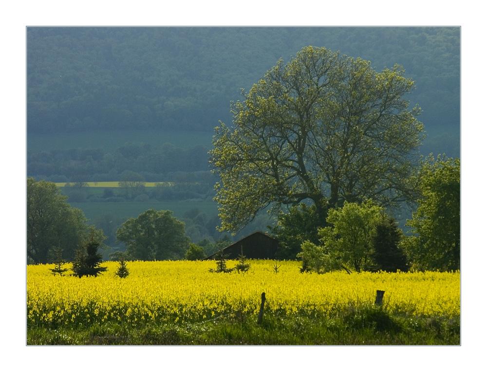 ...etwas verträumte Regenlandschaft im späten Mai...