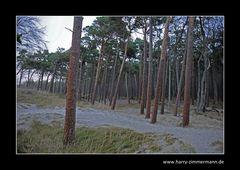 etwas Wald steht noch :o)