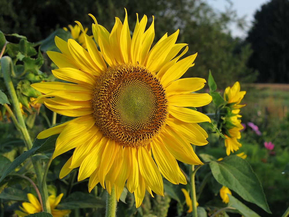 Euch Allen Ein Schönes Wochenende Foto Bild Pflanzen