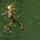 Euh!!! Spiders !!!