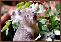 Eukalyptus....... Bonbon