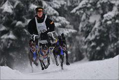 Europäischer Schlittenhund...