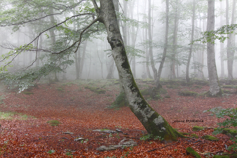 Euskadi, desde el corazón-XXXI