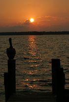 Even Pelicans Enjoy Sunsets