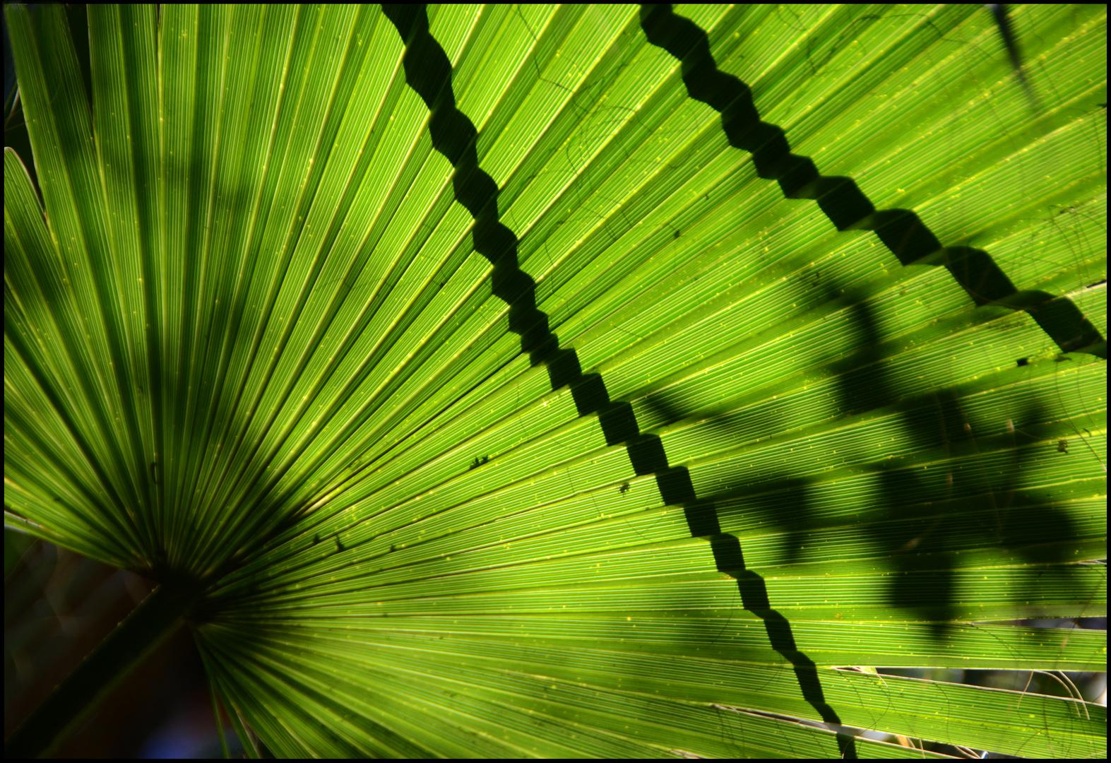 éventail vert