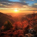 Everlasting Autumn .