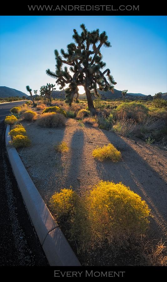 Every Moment - Joshua Tree National Park