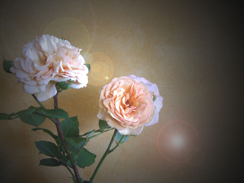 Every Rose...