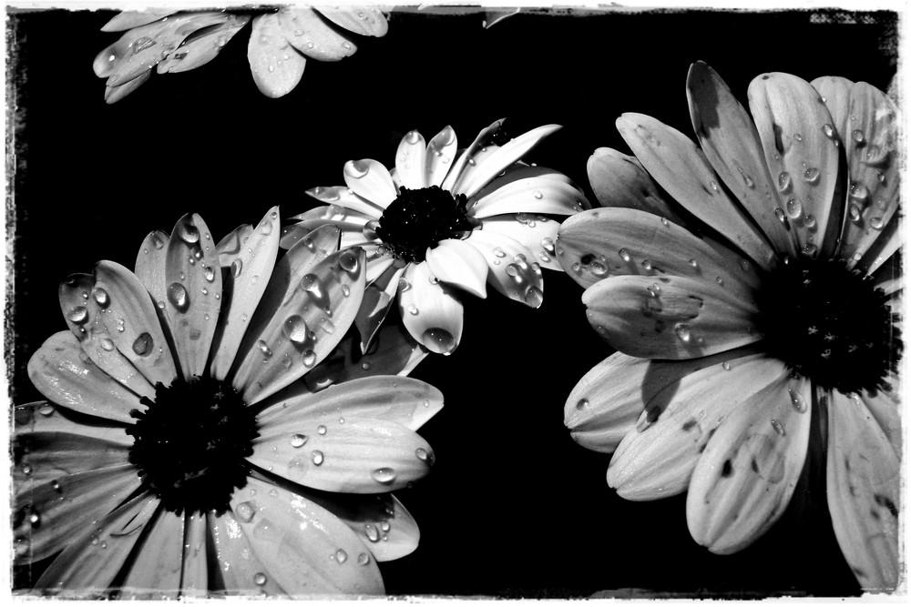 ... everything turns into black & white ...