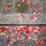 Evidence of Autumn
