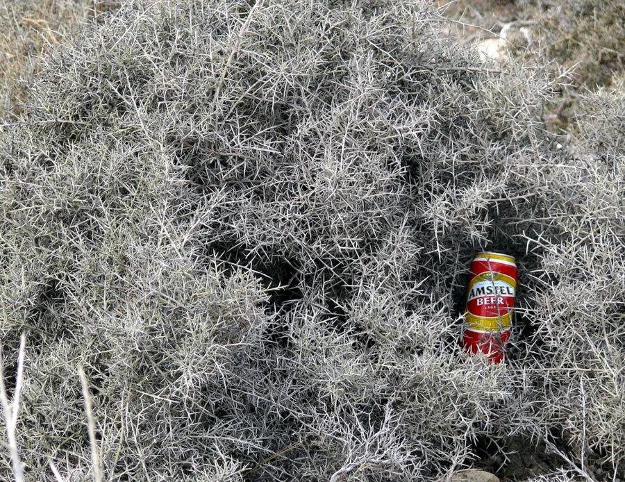 """""""Ex und Hopp"""" ein nicht seltenes Bild auf Kreta"""