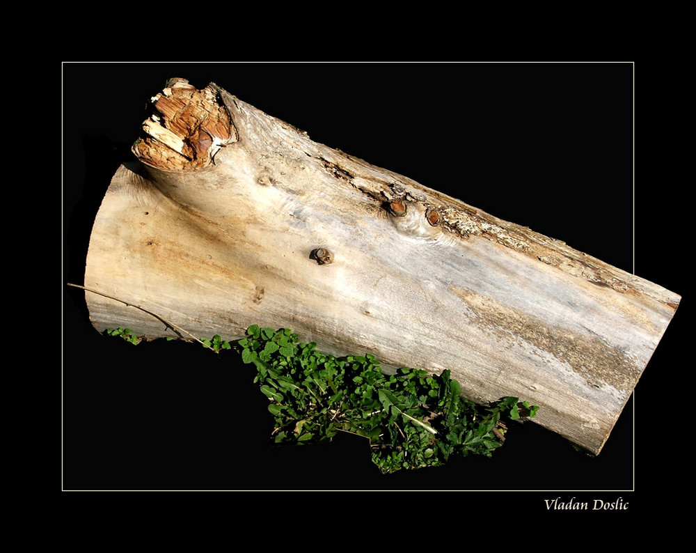 Ex wood