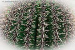 Exakte Stacheln eines Kaktus im Kakteenpark Steinfeld