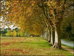 Exercice photographique n° 35 : Les arbres