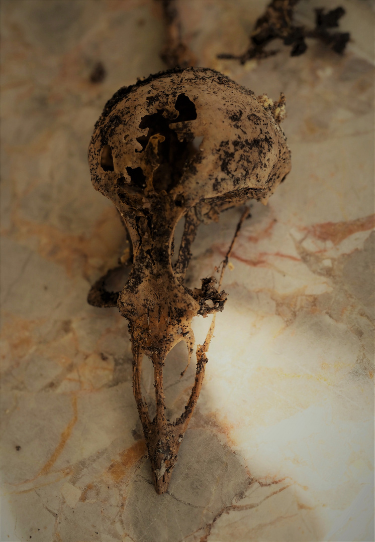 exhumierung