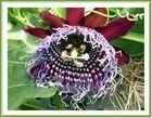 Exotische Blüte