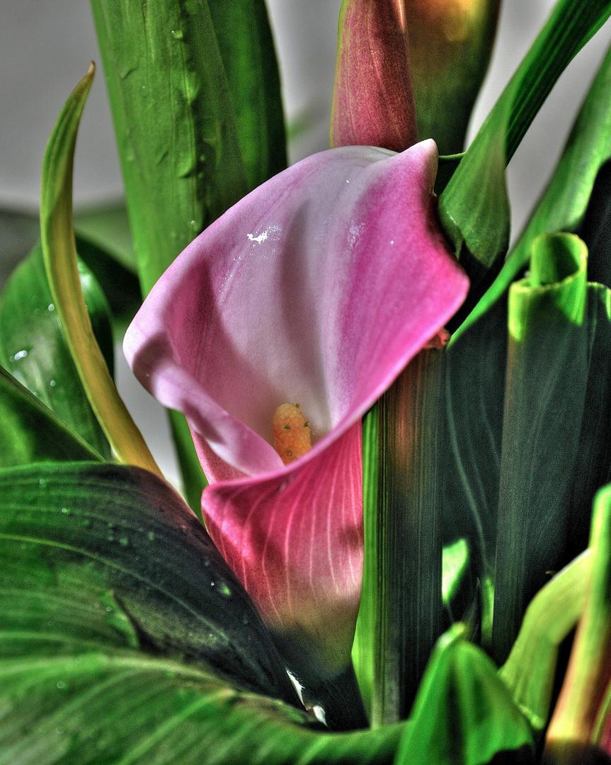 exotische bl te in hdr foto bild pflanzen pilze flechten zimmerpflanzen natur bilder. Black Bedroom Furniture Sets. Home Design Ideas