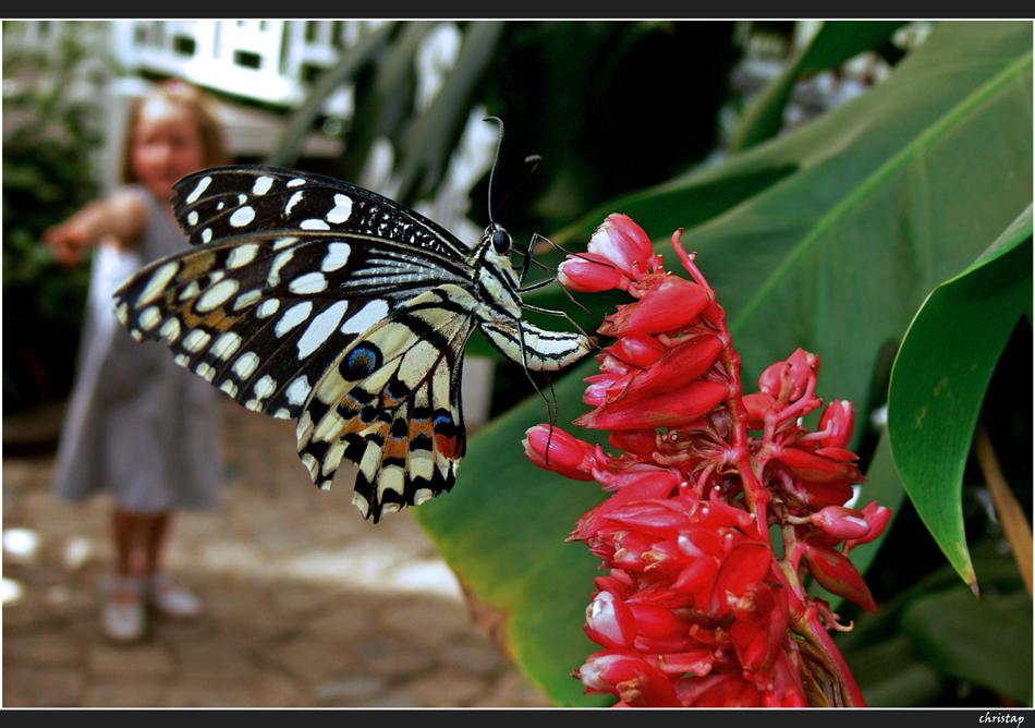 Exotische Schmetterlinge ...