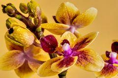Exotischer Blumenfreund