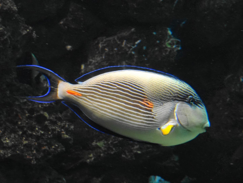 Exotischer Meeresbewohner