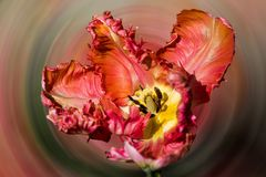 Experiment TULPE