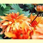 Explosion Orange II