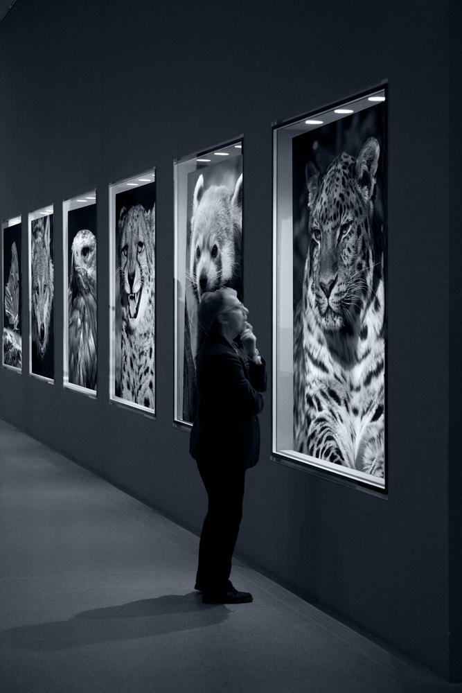 Extinct Animals 21th Century