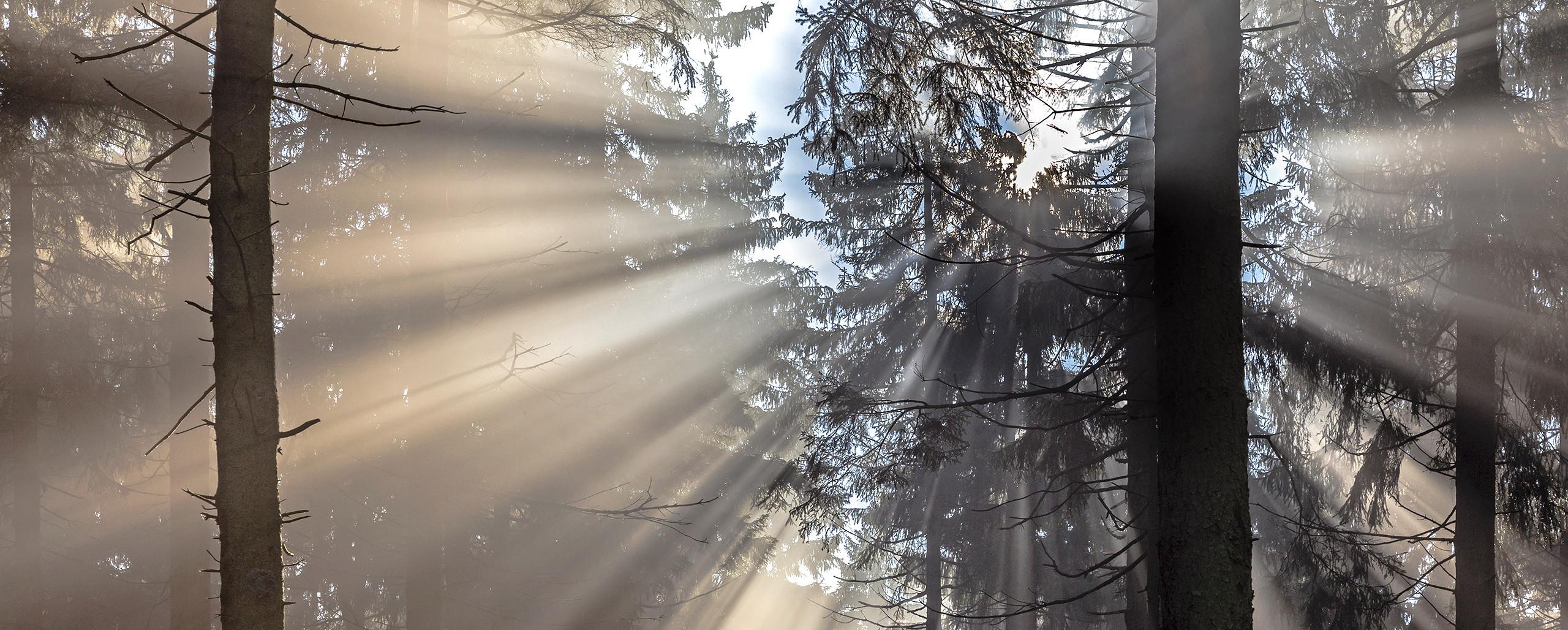 EXTRAORDINARY LIGHT