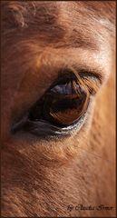 ~eye~