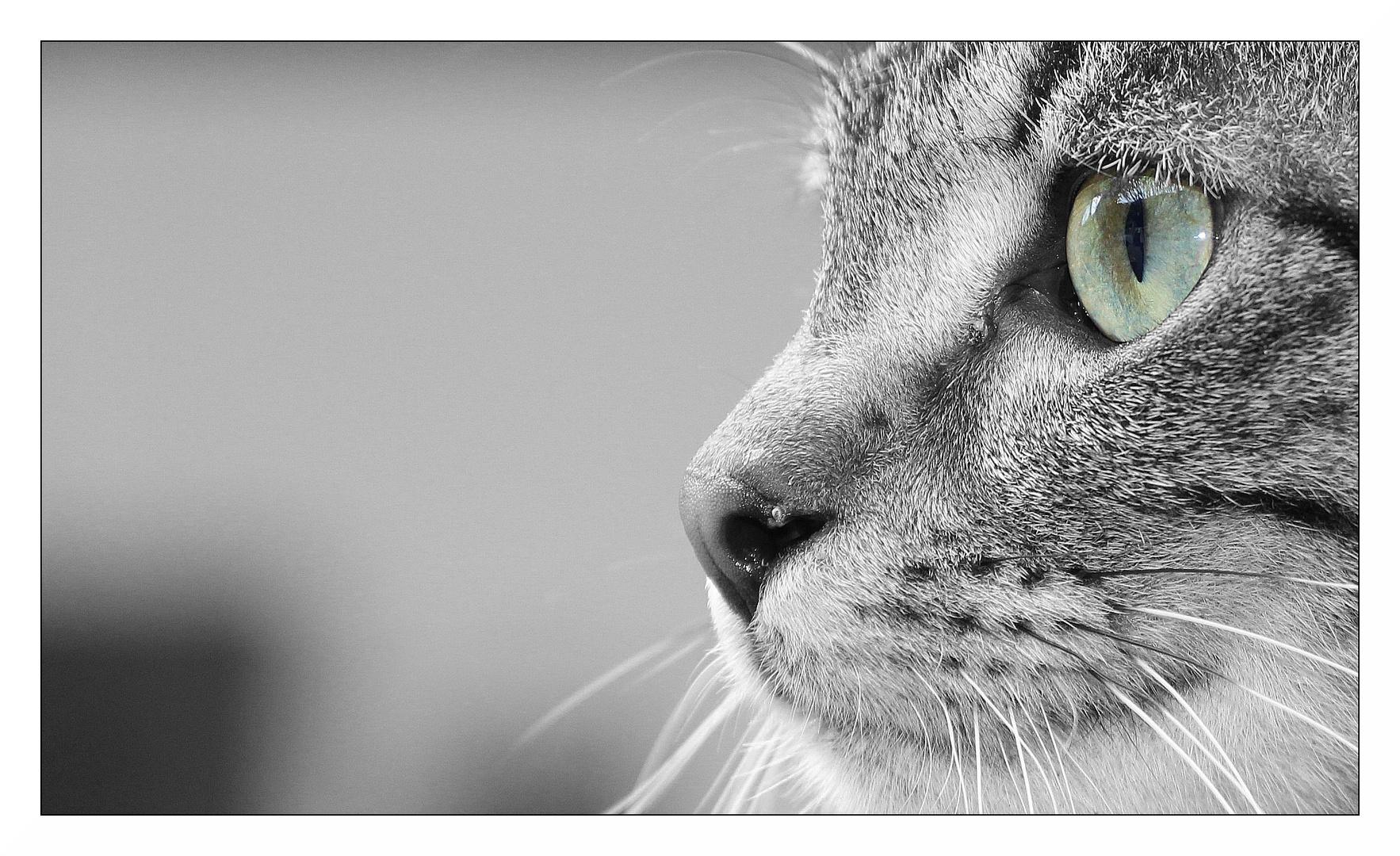 Eye-Catcher