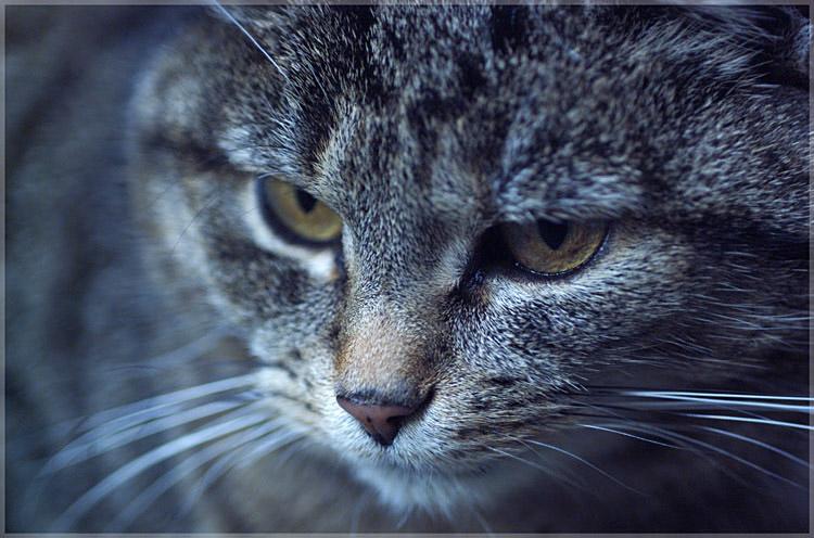 eye of the cat ... - catview #7