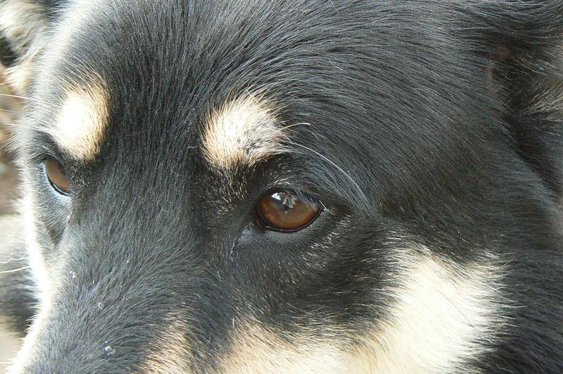 eye of the wulf