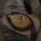 ~~eyes~~