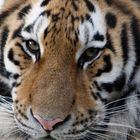 Eyes of the Tiger.