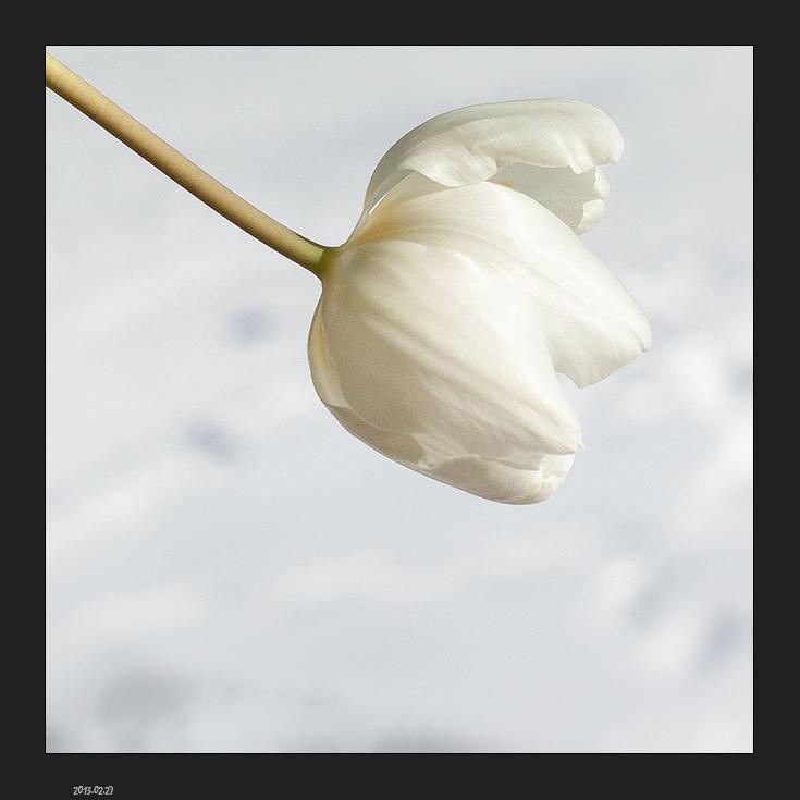 F  comme fleur ou froid ...
