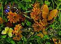 earthart jungle-14-72 von mtuyb