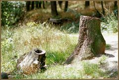 Fabelwesen aus dem Wald - Baumfuss oder -huf? (analog)