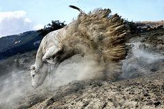 FABIO DE VINCENZO . categoria Mondo Animale , primo classificato