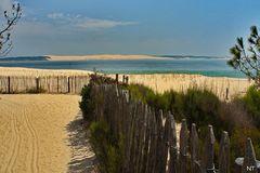 Face à la dune...