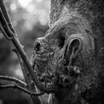 Faces in the Tree